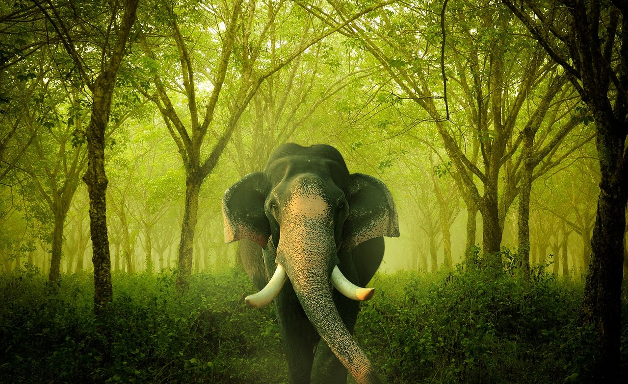 Riding Elephants: Knowing If Your Business is Truly a Success